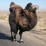 Независимый консультант в сфере путешествий — Центральная и Средняя Азия, Узбекистан